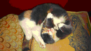 lev-cat