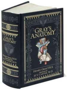 grays-anatomy